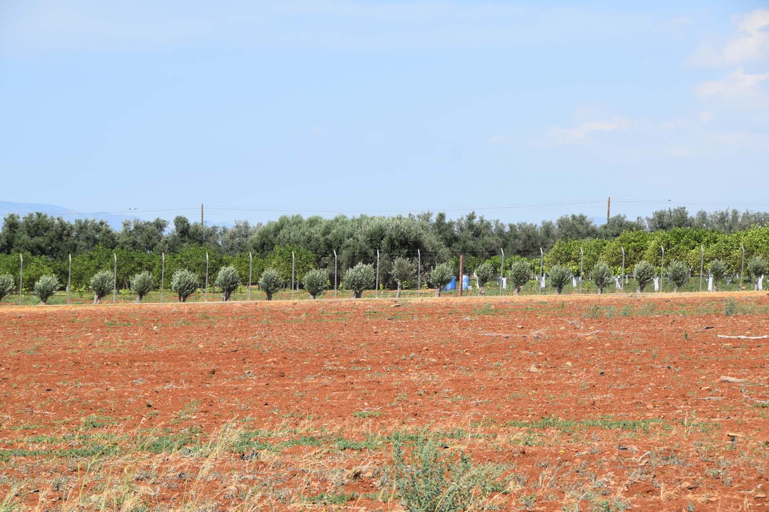 cultivations_4